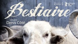 Bestiaire - A Mediation on Animals in Captivity